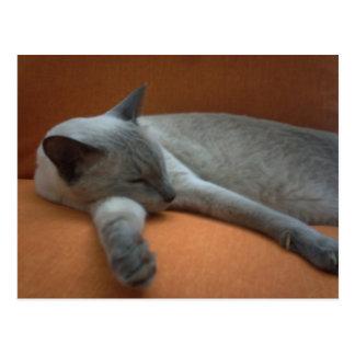 Niedlicher weißer und grauer Aquiles Katzen-Schlaf Postkarte