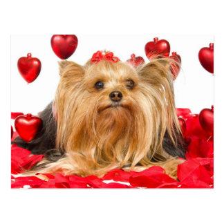 Niedlicher Yorkie Valentine Postkarte