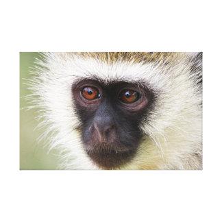 Niedliches Affeporträt Leinwanddruck