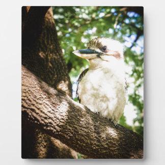 Niedliches Australien Kookaburra Fotoplatte