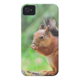 Niedliches Eichhörnchen iPhone 4 Hüllen