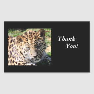 Niedliches Foto des Leopardjungs-Babys danken Rechteckiger Aufkleber