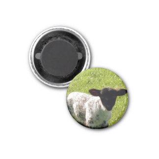 Niedliches Frühlings-Lamm Runder Magnet 3,2 Cm