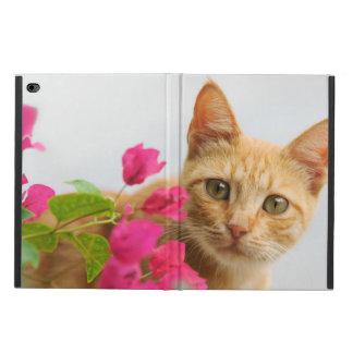 Niedliches Ingwer-Katzen-Kätzchen-aufpassendes