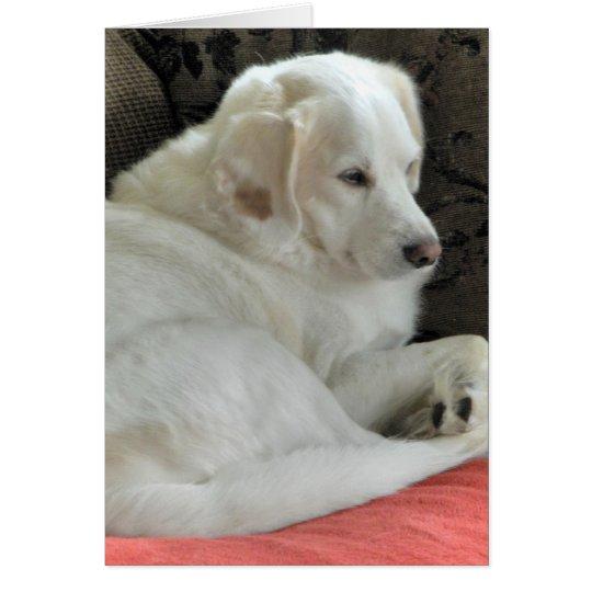Niedliches kleines weißes Hundeporträt Grußkarte