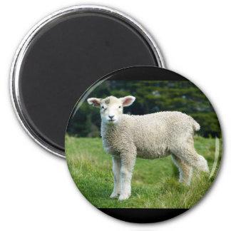 Niedliches Lamm mit schlammigem Gesicht in der Runder Magnet 5,7 Cm