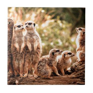 Niedliches Meerkats Keramikfliese