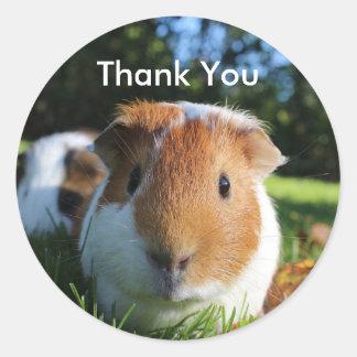Niedliches Meerschweinchen danken Ihnen Runder Aufkleber