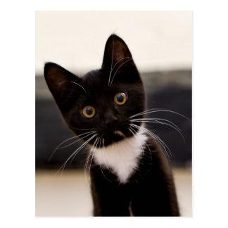 Niedliches Schwarzweiss-Tuxedo-Kätzchen Postkarte