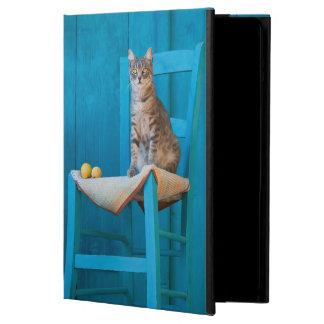 Niedliches Tabby-Katzen-Kätzchen auf einem blauen
