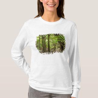 Nikau Palmen, Heaphy Bahn, nahe Karamea, T-Shirt