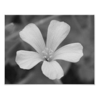 Noir et blanc, fleur photos