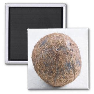 Noix de coco pour l'usage aux Etats-Unis seulement Magnet Carré