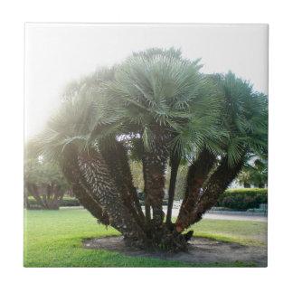 NOLA-Palmen Fliese