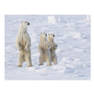 Nordamerika, Kanada, Manitoba, Churchill. 5 Postkarte