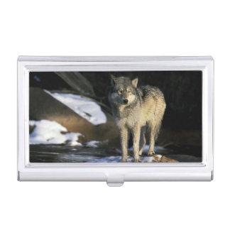 Nordamerika, USA, Minnesota. Wolf (Canis Visitenkarten Etui