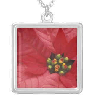Nordamerika, USA, WA, Woodinville, Rot 2 Halskette Mit Quadratischem Anhänger