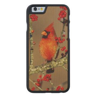 NordKardinalsmann gehockt, IL Carved® iPhone 6 Hülle Ahorn