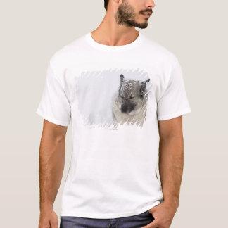 Norweger Elkhound T-Shirt
