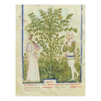 Nouv Acq Lat-Sellerie, von 'Tacuinum Sanitatis Postkarte