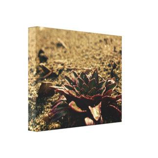 Nur Blume auf dem Strand Leinwanddruck