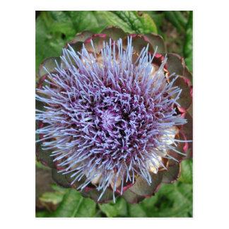 Öffnen Sie Artischocken-Blume. Purpurrot Postkarte