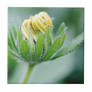 Öffnungs-Blume der Kegel-Blume Keramikfliese