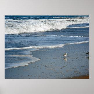 Oiseau de mer - toile affiches