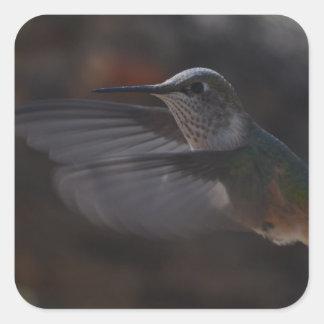 Oiseau de ronflement autocollants carrés