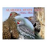 Oiseau d'état de l'Alabama - clignotement du nord Carte Postale