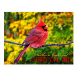 Oiseau d'état de l'Illinois - cardinal du nord Carte Postale