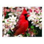Oiseau d'état de l'Ohio - cardinal du nord Cartes Postales