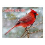 Oiseau d'état du Kentucky - cardinal du nord Carte Postale