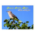 Oiseau d'état du Texas - moqueur du nord Carte Postale
