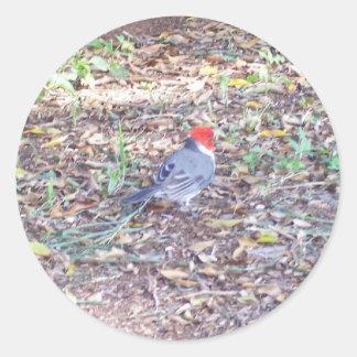 oiseau en Hawaï Adhésif Rond