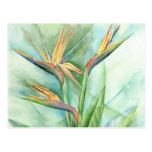 Oiseau tropical de fleur de la peinture de paradis carte postale