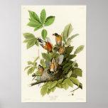 Oiseaux de Robin John James Audubon d'Américain de Poster