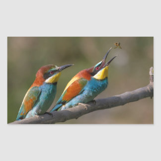 Oiseaux Sticker Rectangulaire