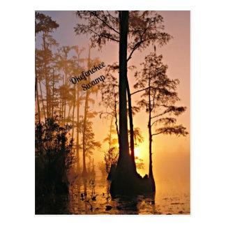 Okefenokee Sumpf Postkarte