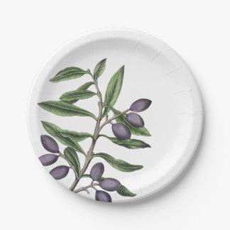 Olivenbaum-Niederlassungs-Grün-lila Platte Pappteller