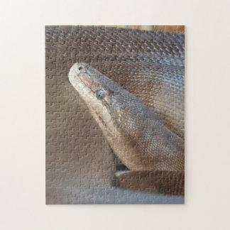Olivgrüne Pythonschlange