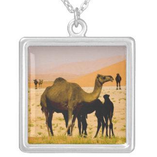 Oman, Unebenheits-Al Khali Wüste, Kamele Versilberte Kette