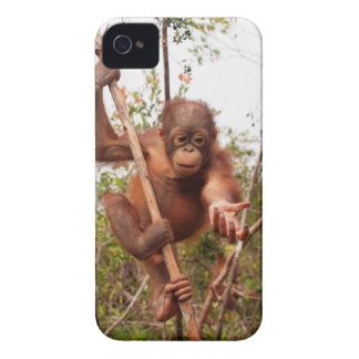 Orang-outan de maçon de délivrance de faune coque iPhone 4 Case-Mate