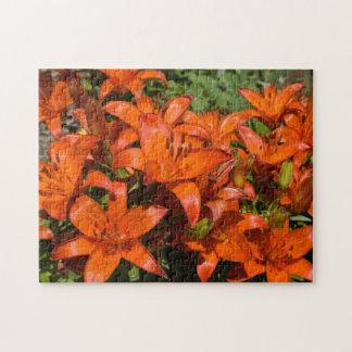 """Orange asiatische Lilie """"Brunello"""" (Lilium) -"""