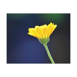 Orange Blume des schönen Nahaufnahme-Fotos auf Leinwanddruck