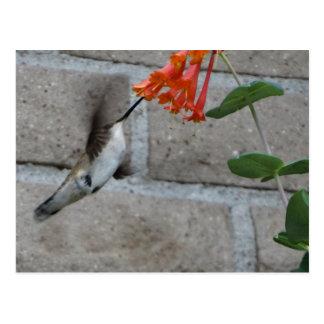 Orange Blume Kolibri Postkarte