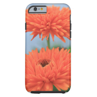 Orange Blumen-Paare Tough iPhone 6 Hülle