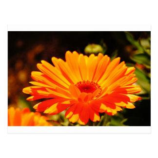 Orange Blumen-Postkarte Postkarte