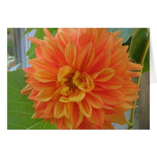 Orange Dahlie Karte
