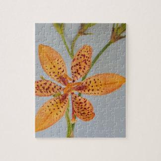 Orange gepunktete Iris genannt eine